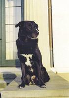 Jason *1991 - † 2005,  Schäferhund-Mischling, reiner Familienbegleithund,  Aufgaben: auf Frauchen aufpassen, Tröster bei Liebeskummer, Qualitätskontrolle Seniorenfutter